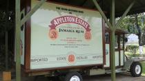 Appleton Rum Tour and Black River Safari Tour from Negril, Negril, Half-day Tours