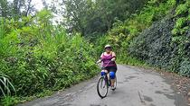 Bicycle Tour of Jamaica's Blue Mountains from Falmouth, Falmouth, Day Trips