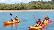 Burleigh Head National Park to David Fleay Wildlife Park Kayaking Tour from the Gold Coast, Gold...