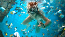 Snorkel and Lunch Cruise from Providenciales, Providenciales, Day Cruises