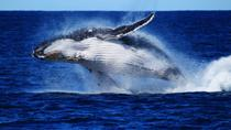 Whale Watching Cruise from Redcliffe, Brisbane or the Sunshine Coast, ブリスベン