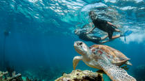 Private Tour Turtle Experience and Cenote Swim, Playa del Carmen, Private Sightseeing Tours