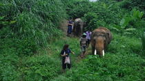 Elephant's Friend Day with No Riding, Chiang Mai, Day Trips