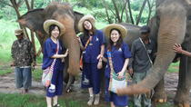 Elephant's Heaven: Half-Day Elephant Experience at Baanchang Elephant Park in Chiang Mai, Chiang ...