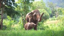 Elephant's Heaven: Half-Day Elephant Experience at Kanta Elephant Park in Chiang Mai, Chiang Mai,...