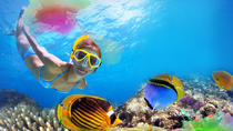 1-Hour Snorkeling Tour and Beach Club Admission with Lunch in Cozumel, Cozumel, Snorkeling