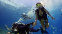 Dive and Drive Cozumel Adventure, Cozumel, Swim with Dolphins