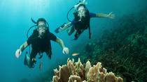 Dive and Drive Cozumel Adventure with Ferry Ride and Transport from Cancun and Riviera Maya,...