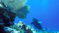 Dive and Drive Cozumel Adventure with Ferry Ride and Transport from Cancun and Riviera Maya, ...