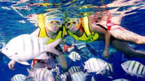 Dune Buggy Scenic Drive Plus Snorkeling and Chankanaab Park with Ferry from Playa del Carmen, Playa...