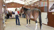 Equine Tour with World Renowned Equestrian, Colorado, Nature & Wildlife