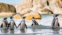 Scheduled tour: Table Mountain, Penguins & Cape Point from Cape Town, Cape Town, Day Trips