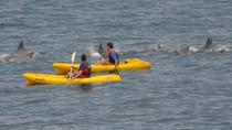 Sea Kayak and Cape Point Private Tour from Cape Town, Cape Town, Day Trips