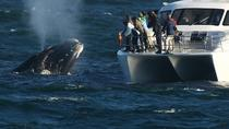 Whale Watching and Hermanus Wine Route: Private Guided Day Tour from Cape Town, ケープタウン