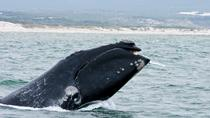Whale Watching Boat Trip with shared transfers to and from Hermanus, Cape Town, Day Trips