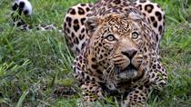 Wild Life Safari Tour including Private Transfer To and From Aquila Reserve, Cape Town, null