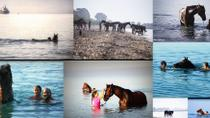 Swim with a Horse in Kalamata, Peloponnes