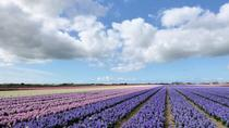 Private Tour: Tulip Fields of Holland Day Tour with Optional Bike Tour from Amsterdam, Amsterdam,...
