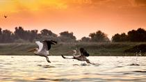 Safari Experience in the Danube Delta, Tulcea, Multi-day Tours