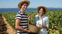 Hinterland of Zadar Small Group Wine Tasting Tour, Zadar, Wine Tasting & Winery Tours