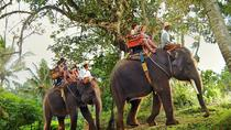 Bali Shore Excursion from Benoa Port to Taro Elephant Safari Park and Ubud Monkey Forest, Ubud, ...