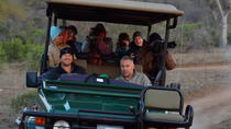 7-Day Privately Guided Greater Kruger Park Safari, Kruger National Park, Multi-day Tours