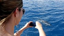 Half-Day Catamaran Tour of the Fernando de Noronha Archipelago