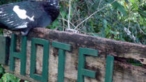 Overnight Orchid Garden Eco-Village Lodge from Belize City, Belize City, Overnight Tours