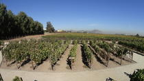 Half-Day Wine and Beer Tour in Santiago, Santiago, Wine Tasting & Winery Tours