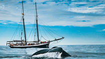 Original Carbon Neutral Whale Watching Tour from Húsavík, North Iceland, Dolphin & Whale Watching
