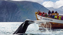 Original Whale Watching Tour on board a Traditional Oak Ship from Husavik, North Iceland, Dolphin & ...