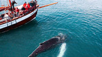 Whale watching on board a Traditional Oak Sailing Ship from Husavik, North Iceland, Dolphin & Whale ...