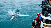 Whale Watching Tour on board a Traditional Oak Ship from Hjalteyri, North Iceland, Dolphin & Whale ...