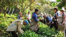 Overnight Quillabamba Coffee Route Tour from Cusco, Cusco, Food Tours