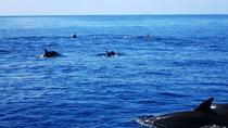 Private Boat Ocean Seafari Tour in Samara, Sámara, Dolphin & Whale Watching