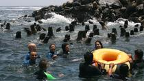 Palomino Islands Cruise & Swimming with Sea Lions in Lima, Lima, 4WD, ATV & Off-Road Tours