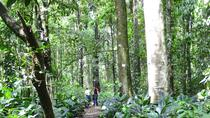 Day Tour to Otun Quimbaya's Flora and Fauna Sanctuary, Pereira, Day Trips
