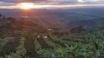 Pijao and Cordoba with Coffee Tasting, Pereira, Day Trips