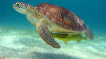 Half-Day Caribbean Sea Turtle and Cenote Snorkeling Tour from Cancun, Cancun, Snorkeling