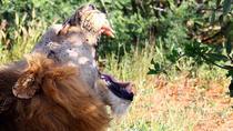 Safari Tsavo East and Amboseli NP from Watamu Malindi Mombasa Diani