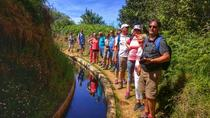 Half Day walking- Levada dos Prazeres, Funchal, City Tours