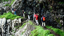 Vereda do Larano Full-Day Walking Tour, Funchal, Day Trips