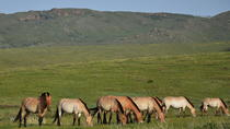 5 Nights Central Mongolia Highlight Tour, Ulaanbaatar, Multi-day Tours