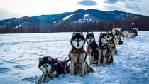 Dog sledding & Chinggis Khaan Statue tour, Ulaanbaatar, Ski & Snow