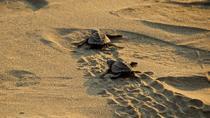 Ixtapa Baby Sea Turtle Release, Ixtapa, 4WD, ATV & Off-Road Tours
