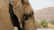 Elephant Sanctuary Tour from Johannesburg, Johannesburg