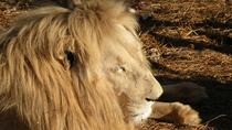 Lion Park Tour from Johannesburg , Johannesburg, Half-day Tours