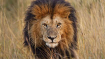 Lion Park Tour from Johannesburg , Johannesburg, Half-day Tours