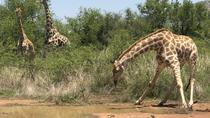 Pilanesberg Safari Day Trip from Johannesburg or Pretoria, Johannesburg, Day Trips