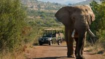 Pilanesberg Safari in Open Vehicle from Johannesburg or Pretoria, Johannesburg, Safaris